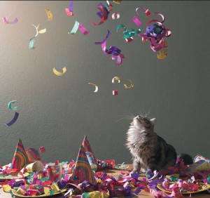 confetti kat