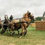Tip: Dag van het Aangespannen Paard