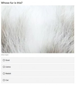 paraveterinaire nascholing quiz haren